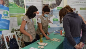 A stage for rice at science festival
